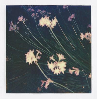 Polaroid #2