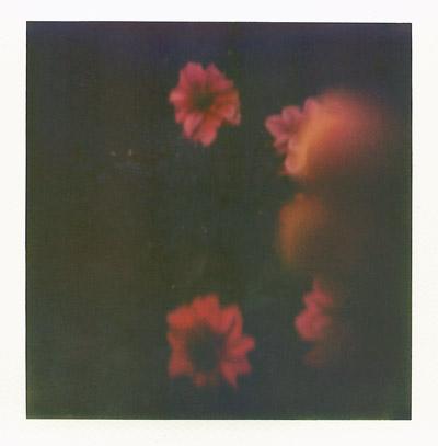Polaroid #4